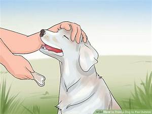 how to train a dog to pee outside 13 steps with pictures With train your dog to pee outside