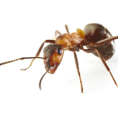 forscher untersuchen das verhalten von ameisen im weltall