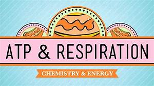Cellular Respiration The Video Says It Is 38 Atp  However