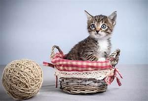 Panier Osier Chat : fonds d 39 ecran chat domestique chatons panier en osier animaux t l charger photo ~ Teatrodelosmanantiales.com Idées de Décoration