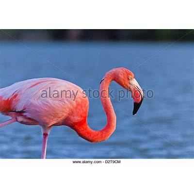 Flamingo Stock Photos & Images - Alamy
