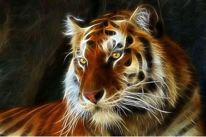 Tiger 3d Wallpapers Fractal Airbrush Desktop Background