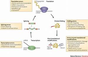 The Evolutionary Consequences Of Erroneous Protein
