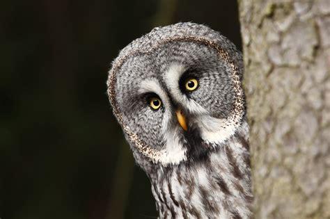 bats owls  spiders   big freebie lyndsey kuster