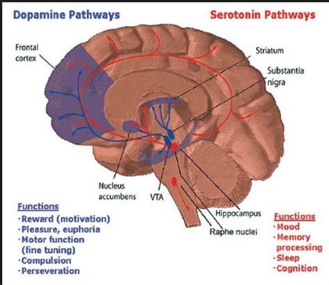 balance  serotonin dopamine  endorphins  happy