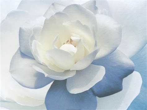 white flower weneedfun
