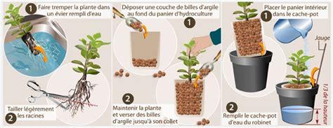 comment faire pousser en interieur faire pousser des plantes en hydroculture jardinage