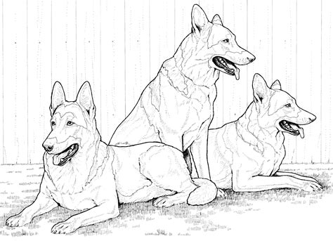 german shepherd coloring pages breed coloring pages