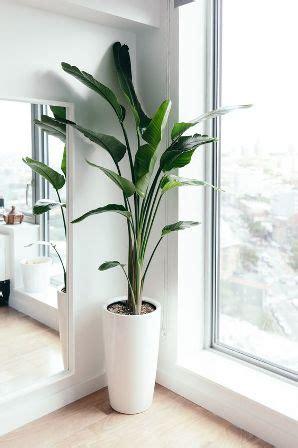tanaman hias kamar tidur bikin ruangan tambah sejuk