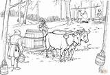 Maple Syrup Coloring Oxen Pulling Sled Pages Barrel Printable Ox Tree Drawing Supercoloring Template Clipart sketch template