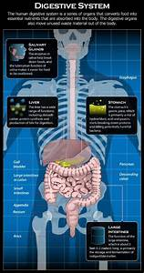 Most Common Digestive System Diseases