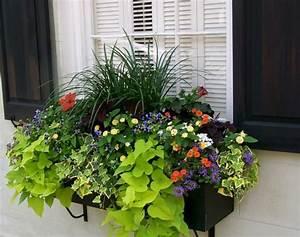 Gräser Für Balkonkasten : die 25 besten ideen zu balkonk sten bepflanzen auf ~ Michelbontemps.com Haus und Dekorationen