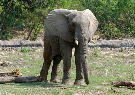 delhi national zoological park viator tours