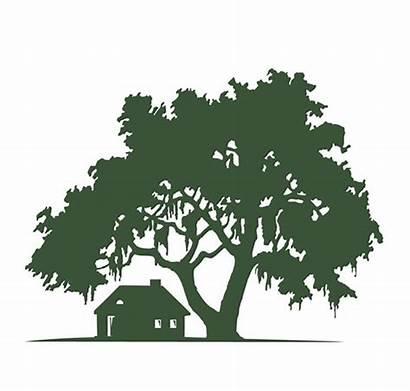Tree Oak Silhouette Landscape Moss Clipart Spanish