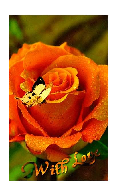 Flores Orange Rose Butterfly Gifs Roses Animation