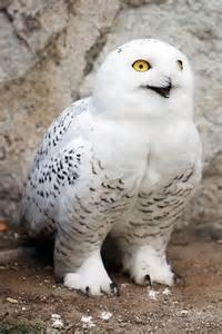 Hedwig the Owl From Harry Potter