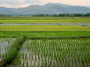 PhD Research Abroad: Birds in Rice Fields of the ...