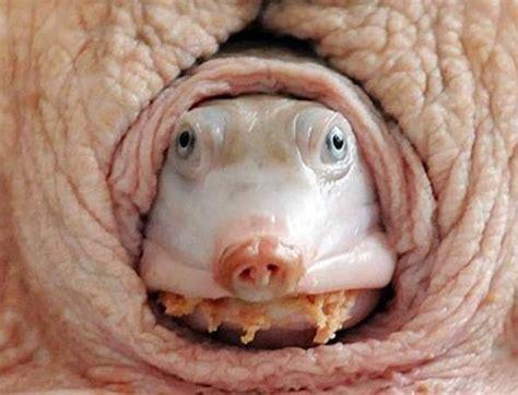gli animali più strani al mondo best5 it