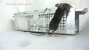 New  - Havahart 1020 Mouse Trap Full Test  U0026 Revew