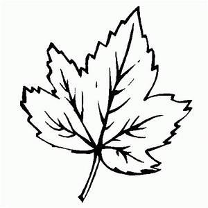 Feuilles D Automne à Imprimer : les meilleurs coloriages d 39 automne ~ Nature-et-papiers.com Idées de Décoration