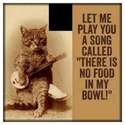 cat songs lolcats banjo lolcats n cat pictures