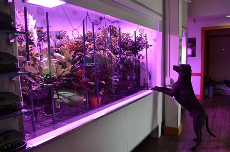 The Ultimate Indoor Garden  Led Indoor Garden  Black Dog Led
