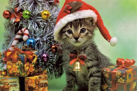 the double negative 187 hey it s christmas here s a cat