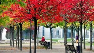 Baum Mit Roten Blättern : schutz vor zu viel sonne warum werden die bl tter im herbst bunt ~ Eleganceandgraceweddings.com Haus und Dekorationen