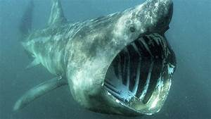10 terrifying sharks that will make you fear the ocean forever