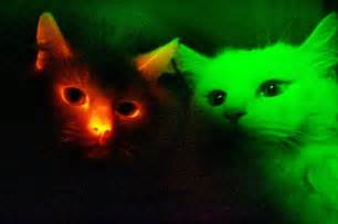 glow in the cat glowing animals pictures of beasts shining for science