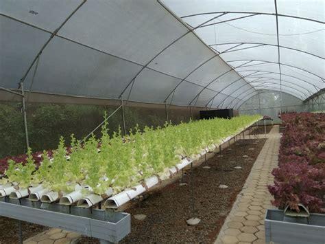 Jual Alat Hidroponik Bogor jual sayur organik dan hidroponik di bogor petani