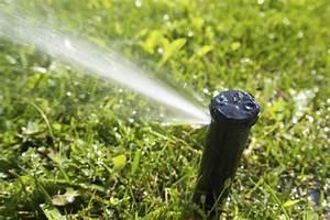 Gartenarbeit Im August : gartenpflege tipps im august husmann galabau blog ~ Lizthompson.info Haus und Dekorationen