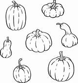 Gourds Outline Pumpkins Different Gourd Types Shapes Vector Clip Pumpkin Isolated Sizes Illustrations Squash Vegetable sketch template