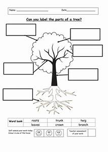 Label The Parts Of A Tree By Ruthbentham
