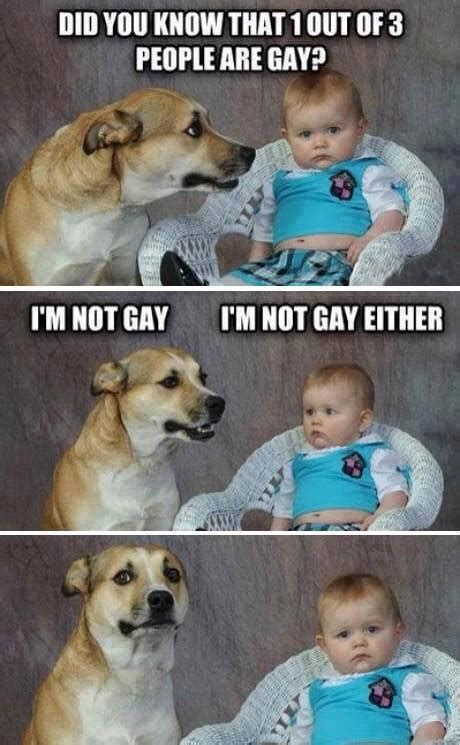 Gay Dog Meme - are you gay funny pictures quotes memes jokes