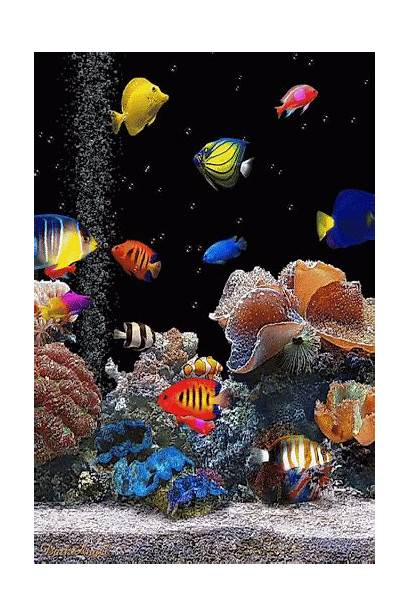 Fish Aquarium Feito Animated Marine Tanks Tank