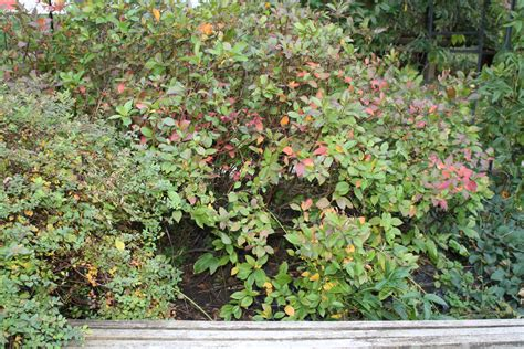 Names of Small Bushes and Trees