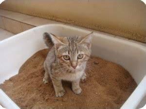 Litiere Chat Sans Odeur : quelles liti res pour chat laquelle choisir matoonet ~ Premium-room.com Idées de Décoration