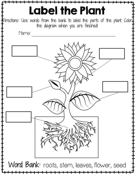 flower parts worksheet for kindergarten preschoolers