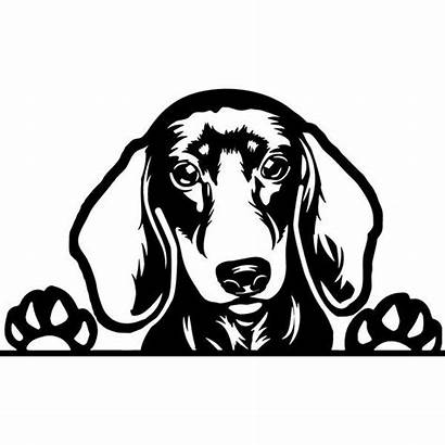 Dachshund Dog Haired Pet Pedigree Silhouette Svg