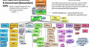 Scottish Dna Project Blog  Haplogroup R1b Marker L1335