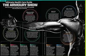 Ultimate Health Care Guide  The Science Of Arm Muscles And