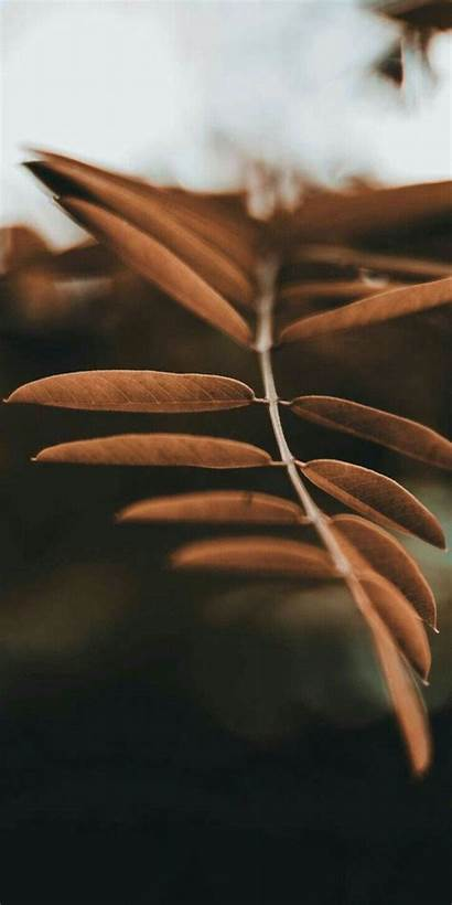 Brown Aesthetic Phone Iphone Wallpapers Android Pixel