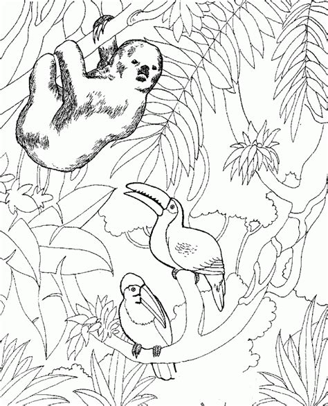 zoo animals coloring pages  preschoolers coloring pages