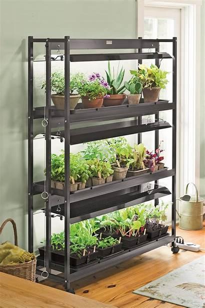 Garden Indoor Plants Houseplants Winter Supply Grow