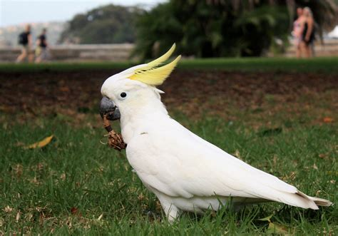 Cockatoo Bird Photos Hd Wallpapers Download