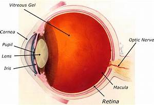 Retinal Detachment  Causes  Symptoms  Diagnosis And
