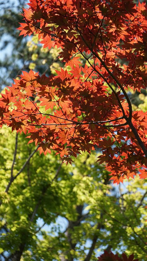 Perfect autumn garden projects - Growing Family