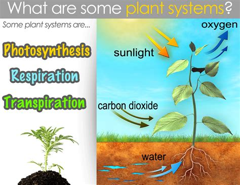 classical conversations cycle 1 week 12 science plant systems cycle 1 classical education