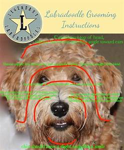 How To Groom An Australian Labradoodle